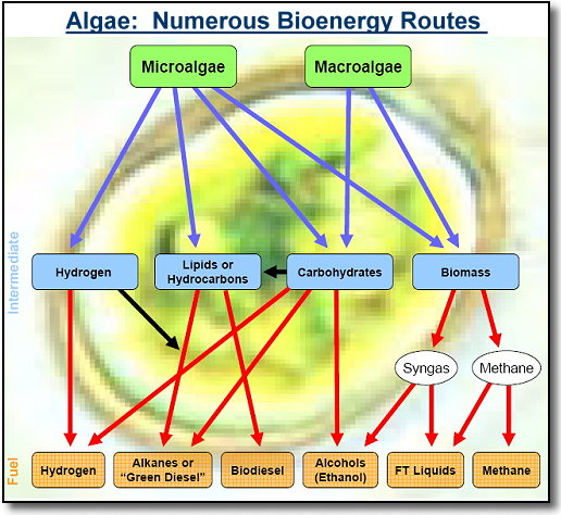 research paper algae biodiesel Bio-fuels as alternative fuels for internal combustion  biodiesel this paper also reviews the experimental research  bio diesel from algae,.