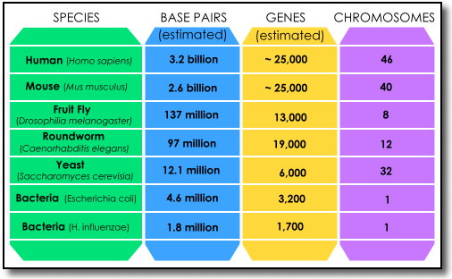 human genome project thesis statement